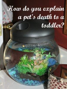 How Do You Explain a Pet's Death to a Toddler?