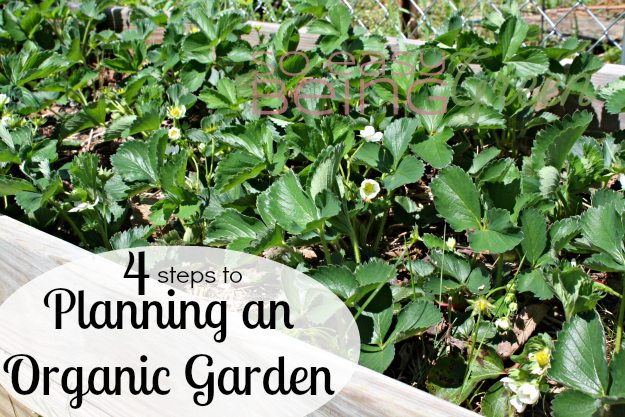 Planning an Organic Garden
