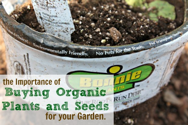 Buying Organic Plants and Seeds