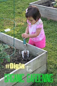 Reflecting on Our Organic Gardening Journey