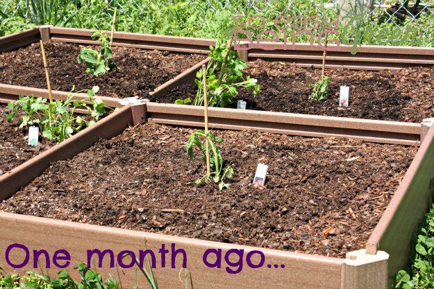 organicgardenonemonth