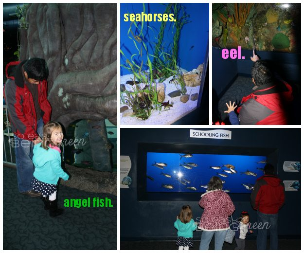 AquariumCollage