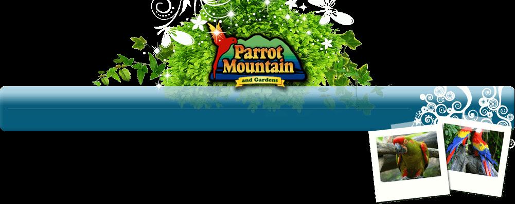 parrotmountain