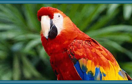 parrotmountainbird