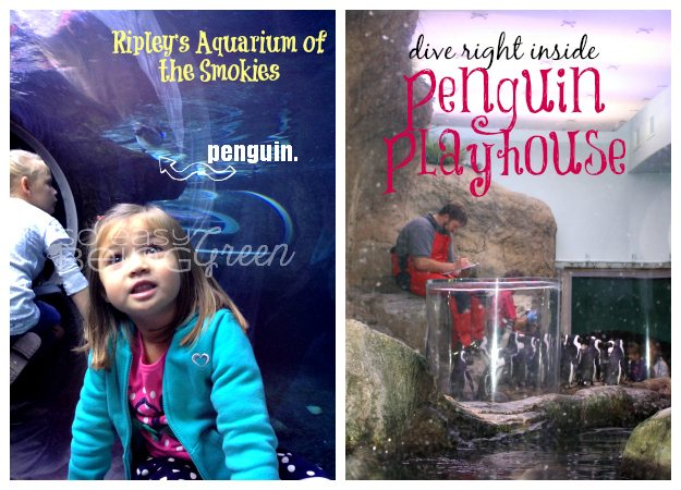 penguinplayhouseCollage