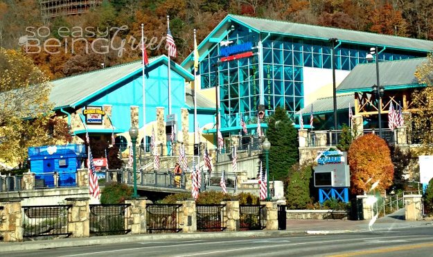 Ripley 39 S Aquarium Of The Smokies A Must See In