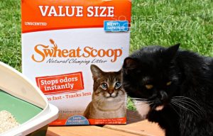 A Cat That's Going Green: Eco Friendly Cat Litter from Swheat Scoop