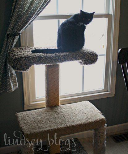 cat sitting on DIY Cat Tree