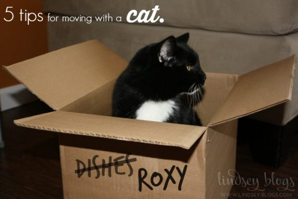 Moving-with-a-Cat-600x400