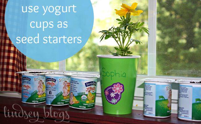 Yogurt Cups Seed Starters