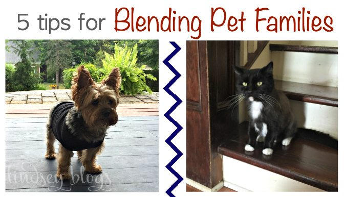 Blending Pet Families