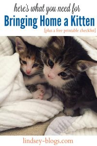 Checklist for Bringing New Kitten Home [Free Printable]