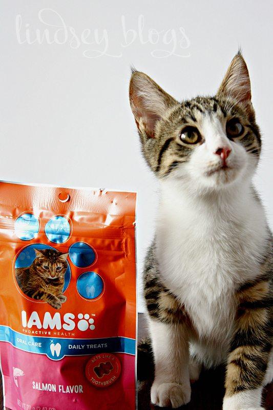 Cat Gifts Cat Treats