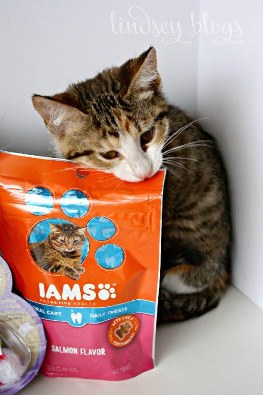 Iams Cat Food Treats Cat Gifts