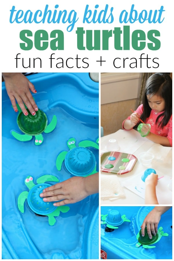 Teaching Sea Turtle Facts for Kids with Sea turtle Crafts