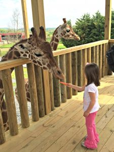 Get FREE Knoxville Zoo Tickets [& 140 other Zoos too!]