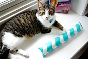 DIY Cat Toy – Make Your Own Cat Kick Stick