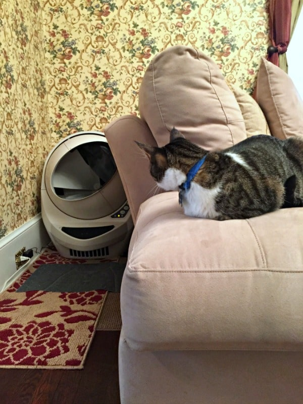 While The Litter Robot Does Take Up A Bit More Space Than A Traditional  Sized Litter Box, It Fit Perfectly In The Same Space We Had Been Using.