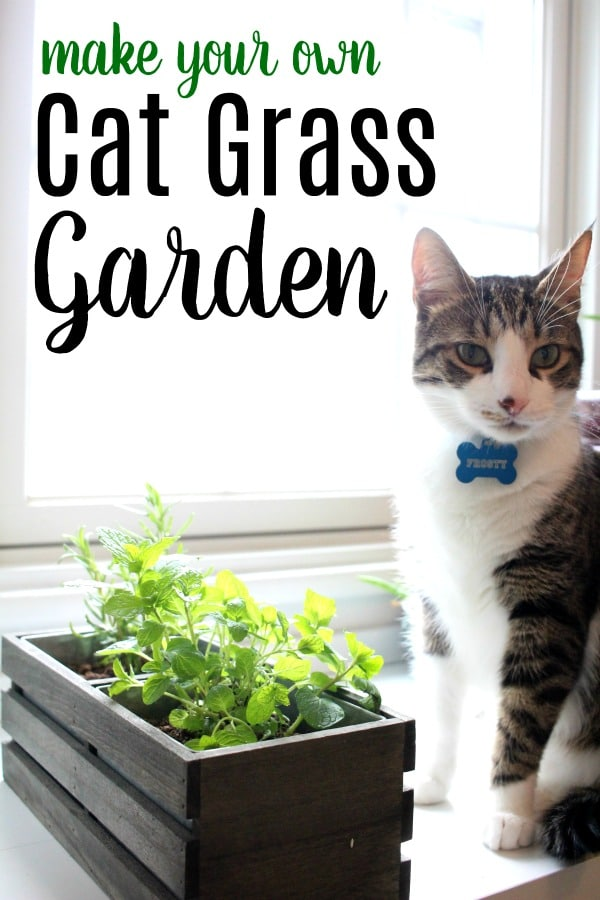 cat sitting by plants to make cat grass garden
