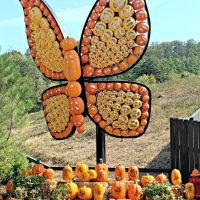 7 INSIDER TIPS to Make Your Visit to the Dollywood Great Pumpkin LumiNights AMAZING