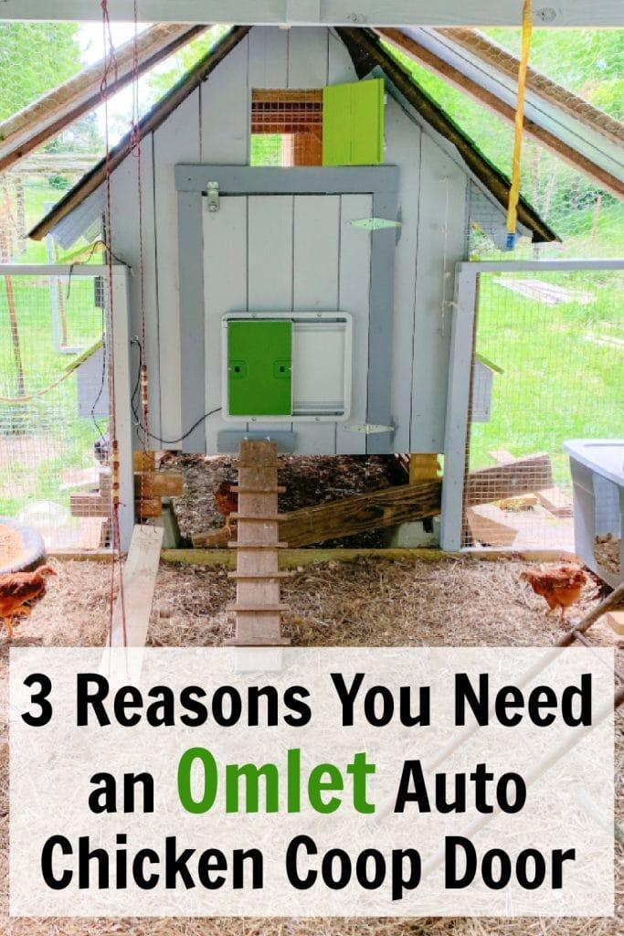 3 Reasons You Need an Omlet Chicken Coop Door + Omlet Promo Code